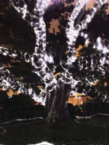 Celebration in the Oaks lights up New Orleans holiday season