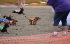 Wiener dog racing crowns top dog at Fair Grounds