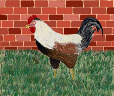 Campus rooster adopted by facilities employee