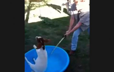 Update: Video of goat beheading sent to SPCA, TUPD initiates investigation