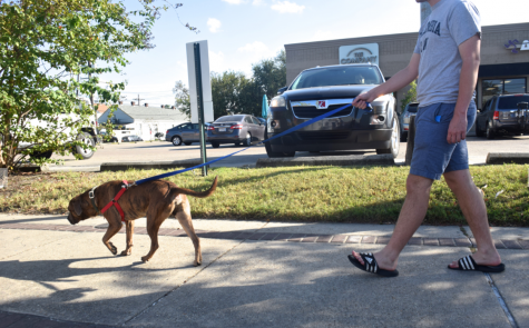 A student participates in Zeus' Place's dog walking program on Freret Street. Dogs are available for walks every day of the week.