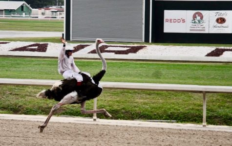 Ostriches, camels race for glory at Fair Grounds