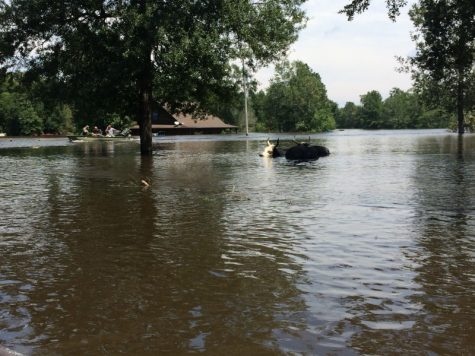 In the wake of Hurricane Harvey, more than 50 inches of rain and severe flooding damaged many homes and buildings.