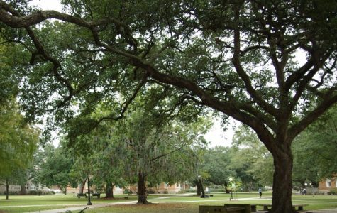 Uprooting tradition: Tulane cuts down historic trees