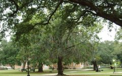 "Historic ""bead tree"" removed from Tulane's campus"