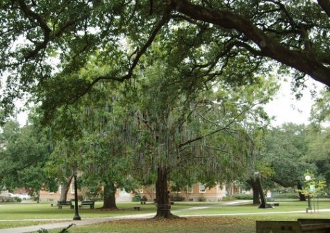 Tulane's trees are well-rooted in the university's past.