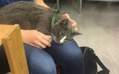 New cat cafe brings meow-ificent cuteness to NOLA, keeps attendees feline good
