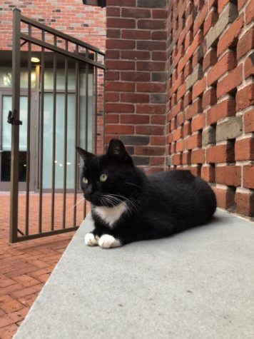 Tulane cancels plan to relocate campus cats after pushback from community