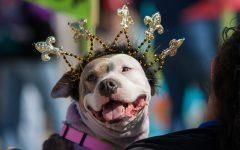 Krewe of Barkus unleashes Mardi Gras