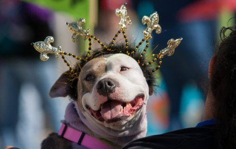Krewe of Barkus unleashes Mardi Gras
