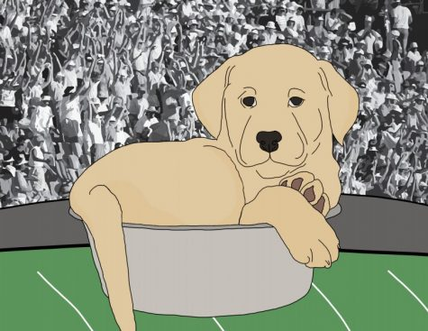 Puppy Bowl's fetching players make for ruff-est competition of the weekend