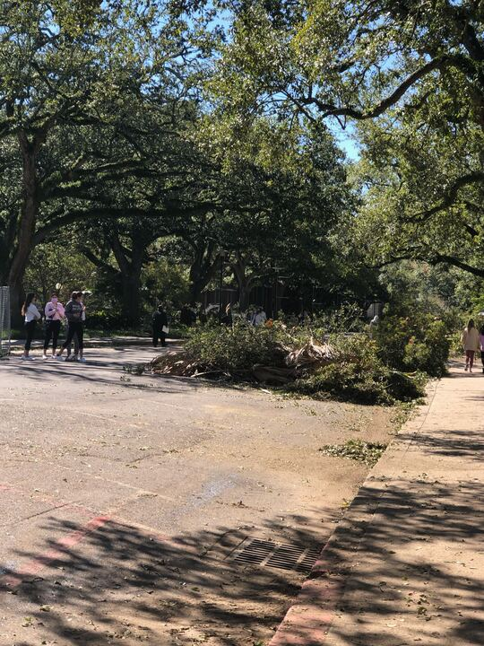 Tree debris from the hurricane on Tulane's campus.