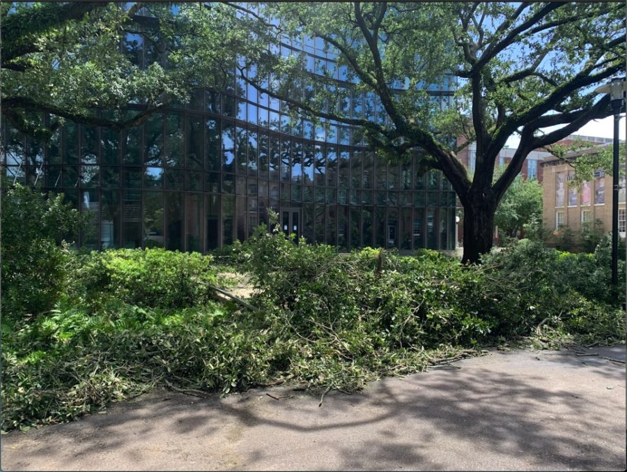 trees are down in front of AB freeman business school